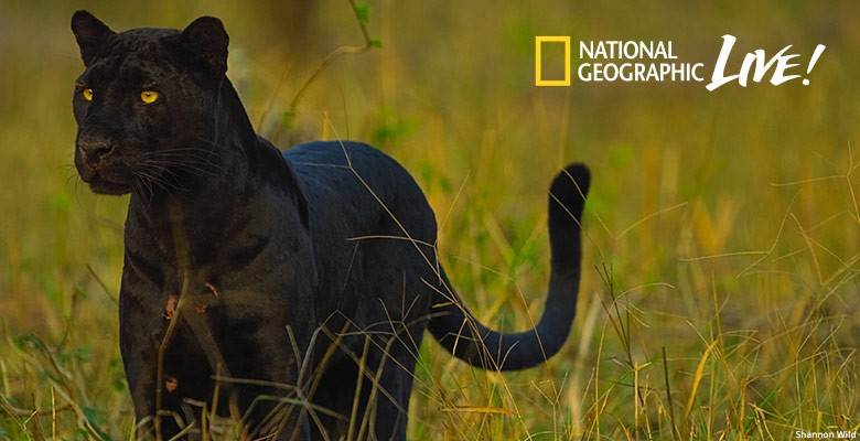 Portland'5 presents NATIONAL GEOGRAPHIC LIVE—PURSUIT OF THE BLACK PANTHER | Shannon Wild, Photographer & Cinematographer | Monday, January 27, 2020, 7:30pm | Playing at: The Portland'5 Newmark Theatre