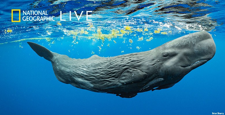 Underwater photo of whale by Brian Skerry