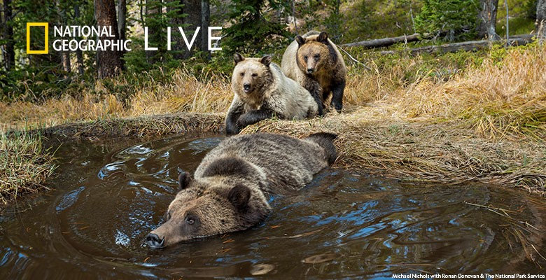 Photo of bear in river with cub waiting on shore