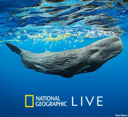 Brian Skerry's underwater photo of whale